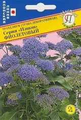 """Трахелиум """"Пэшэн"""" Фиолетовый"""
